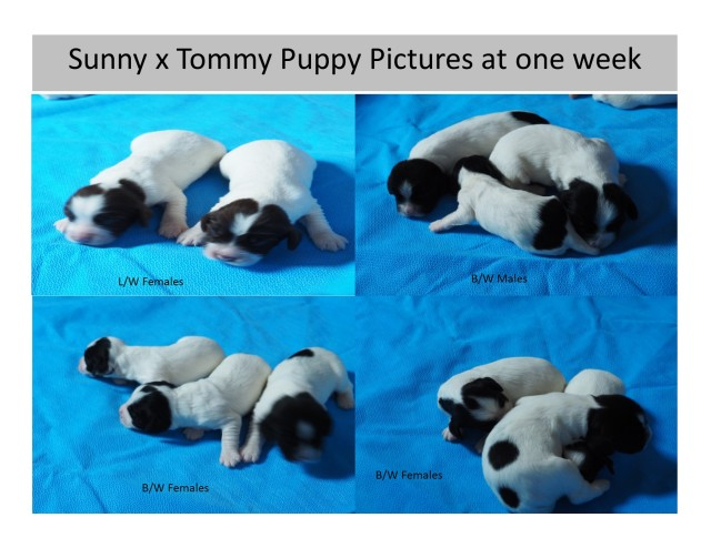 ESSFT One Week old puppy pics